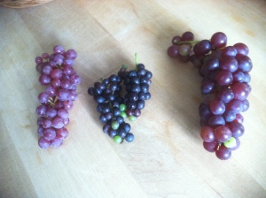 Mars, Jupiter, Venus grapes